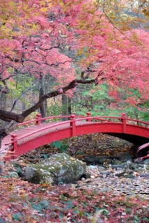 Steinhardt garden bridge in NY in October -   photo by Jan Johnsen