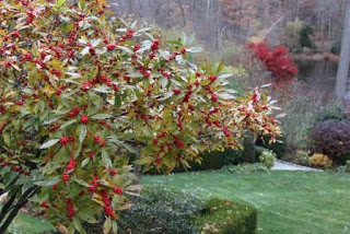 Love that winterberry...