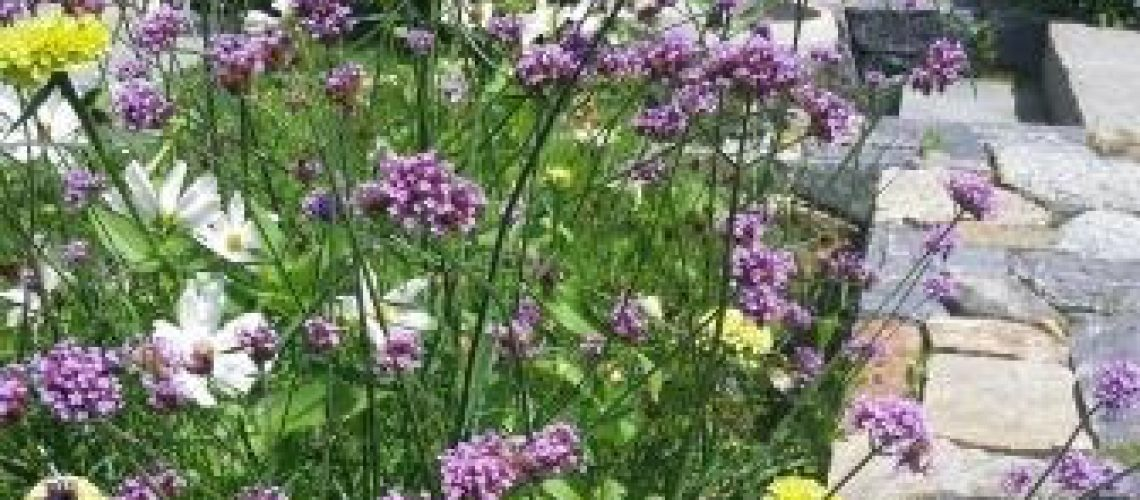 verbena-jan-johnsen-web
